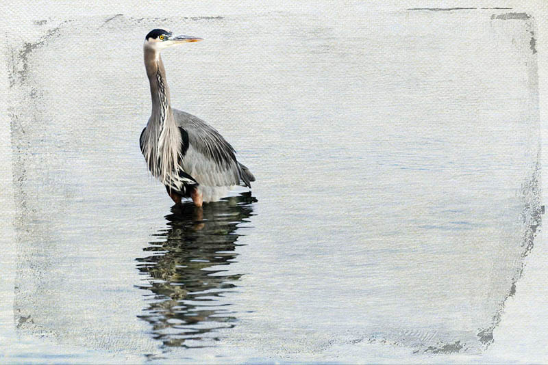 Painterly Great Blue Heron