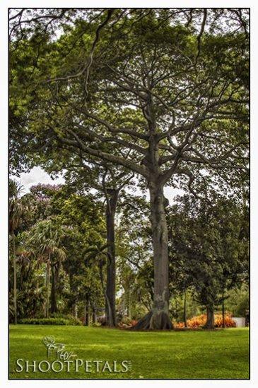 Photograph foster botanical garden on island time for Foster botanical garden honolulu