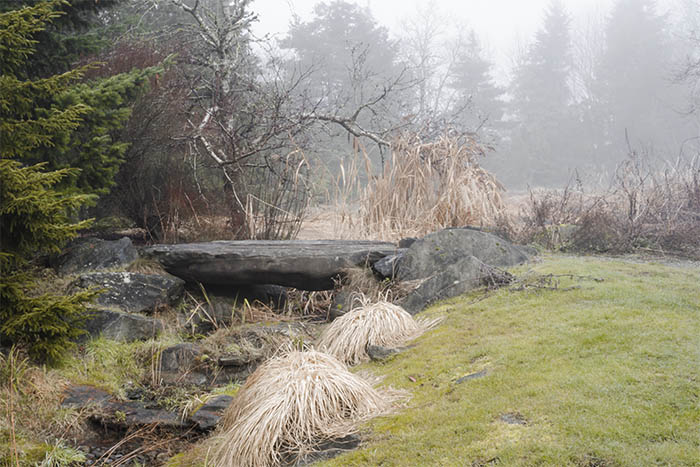 VanDusen Botanical Garden Pitcher Plants