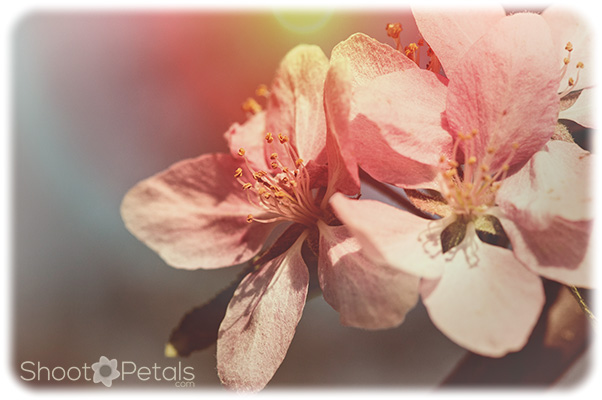 White cherry blossoms on a colourful background.