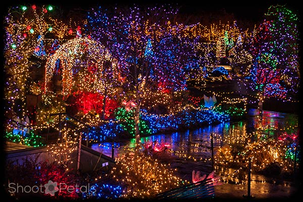 VanDusen Botanical Gardens Festival of Lights.
