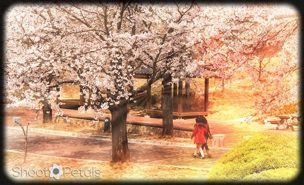 Two Children Walking Under the Cherry Trees