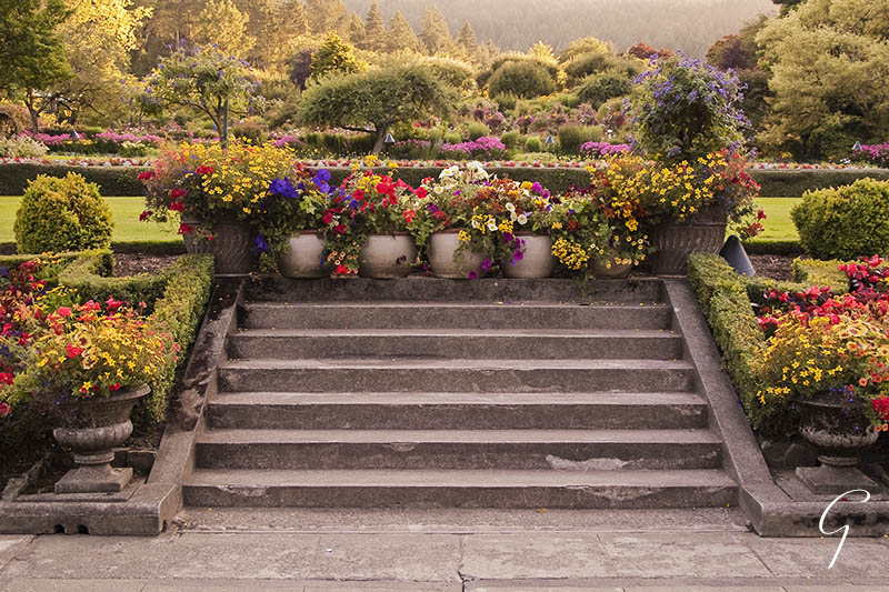 Glowing summer evening colours at Butchart Gardens