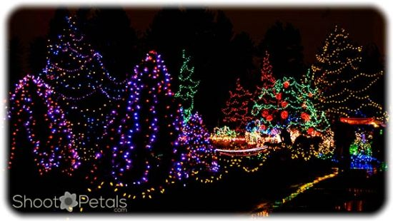 VanDusen Botanical Gardens Festival of Lights 4