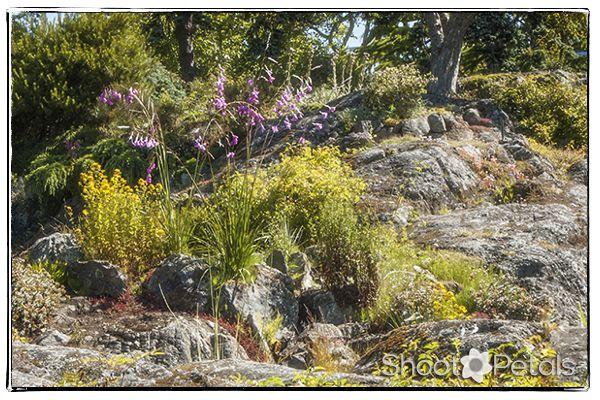 Rocky landscape at Abkhazi Garden