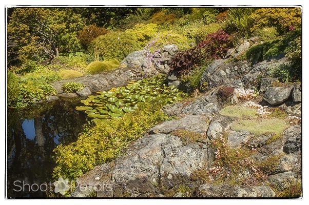 Abkhazi Garden rocky terrain and pond.