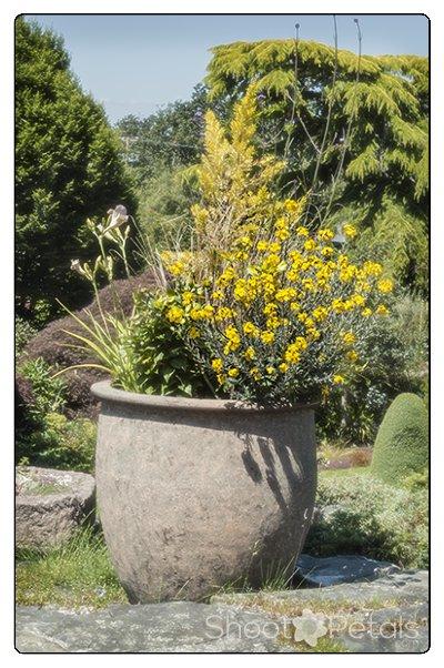 Abkhazi Garden terra cotta planter on the patio.