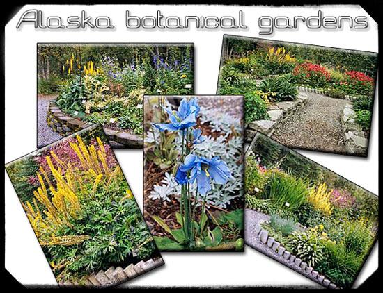 Alaska Botanical Garden upper perennial, demonstration garden.