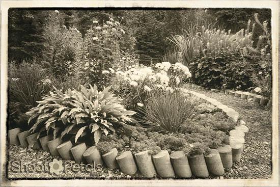 Alaska Botanical Garden Upper Perennial Garden Glow and Vignette