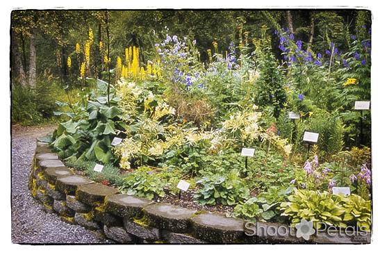 Alaska Botanical Garden, the Upper Perennial Garden