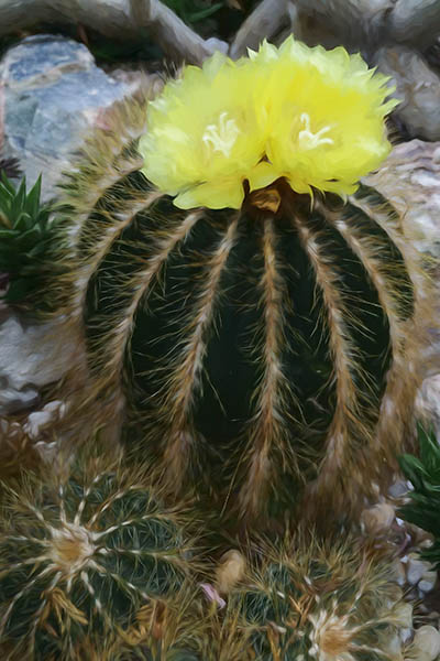 Cacti in Allan Gardens Arid House
