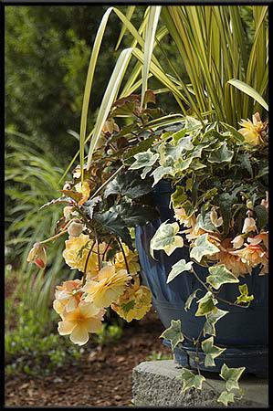 Photo Of Peony Plant f 5.6