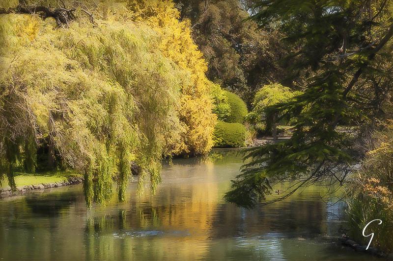 Autumn at Beacon Hill Park
