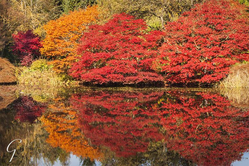Autumn Reflections at VanDusen Botanical Garden