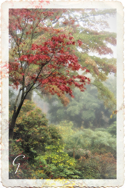Stanley Park In Autumn Fog