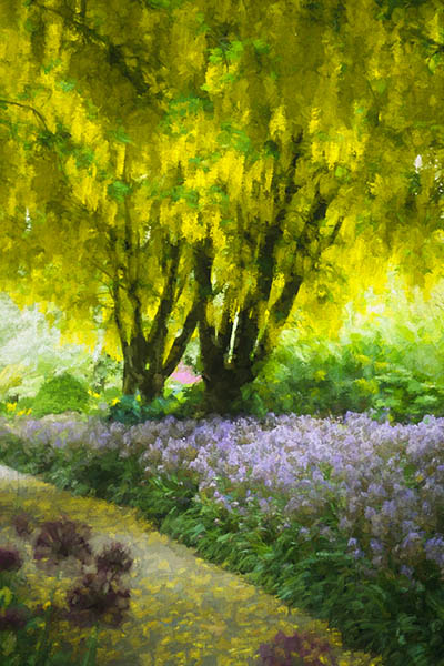 VanDusen Botanical Garden, the Laburnum Walk