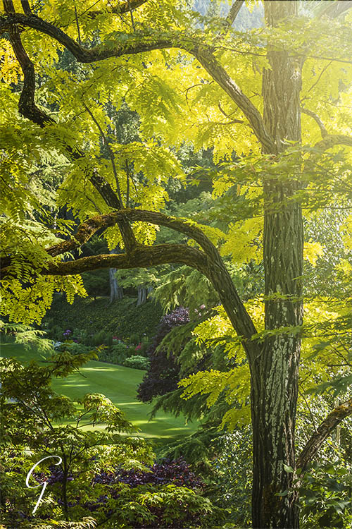 Butchart Gardens HDR Tree