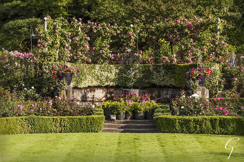 Formal Rose Garden at Butchart Gardens, Victoria
