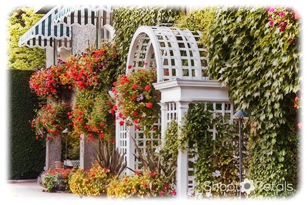 Summer Butchart Gardens Hanging Baskets