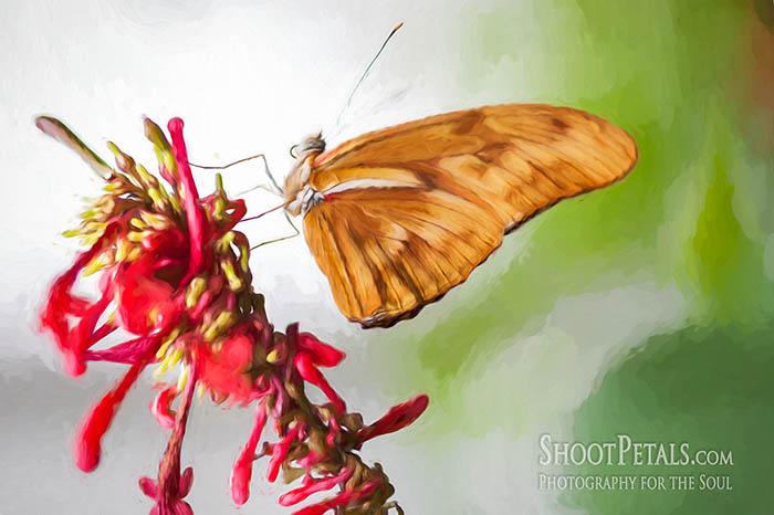 Niagara Falls Butterfly Gardens, Dryas Julia