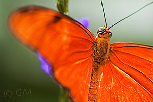 Butterfly photography - composition - blurred wing