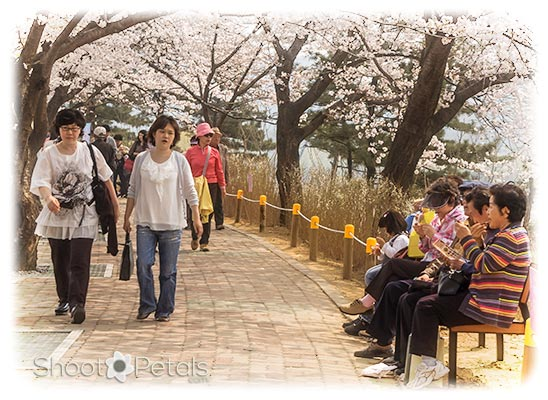Yeouido Spring Festival of Flowers