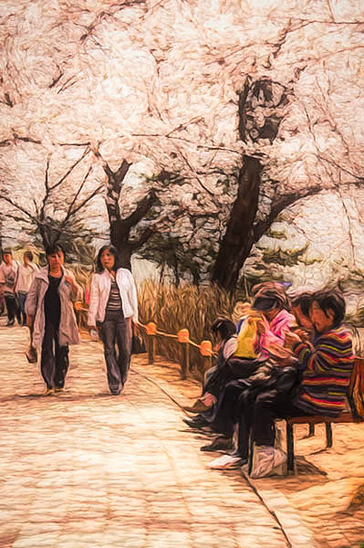 Walking Under the Cherry Blossoms, Yeouido
