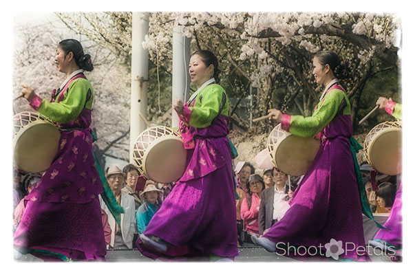 Spring Flowrs Festival Yeouido Korean Traditional