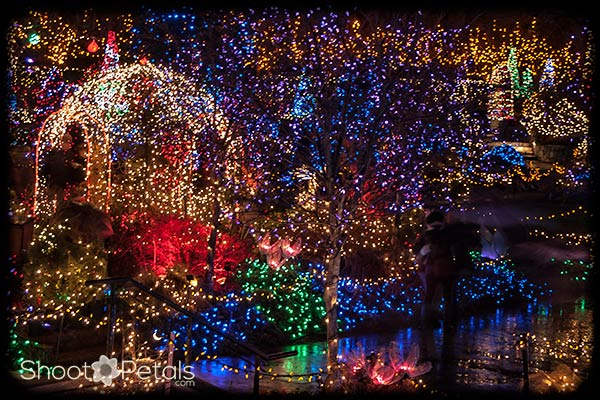 VanDusen Botanical Garden Festival Of Lights. Picture From The Covered  Porch In The Rain. Some Reflections In The Walkways.