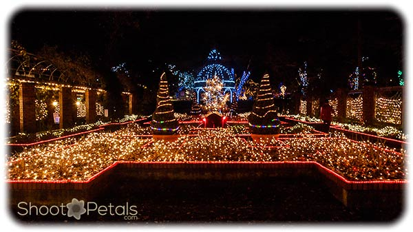 Festival of Lights at Park Tilford Gardens