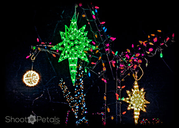 Lights at Park Tilford Gardens