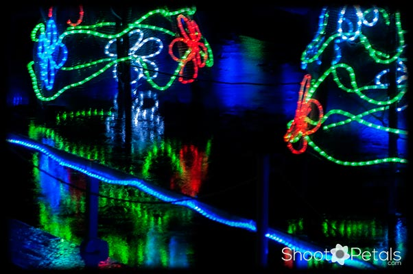 VanDusen Botanical Gardens Festival of Lights Reflections 2