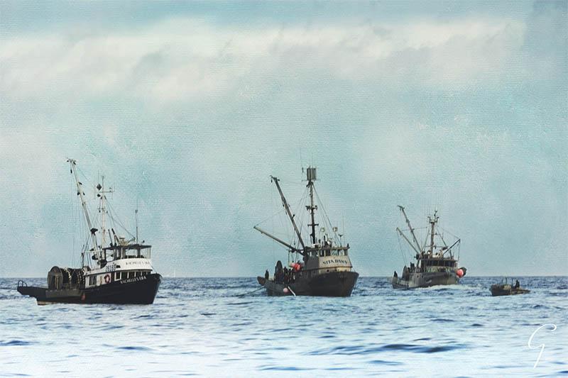 Fishing Boats Off Qualicum Beach Nov 2016