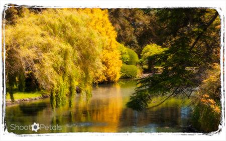 Beacon Hill Park Victoria BC, golden reflections.