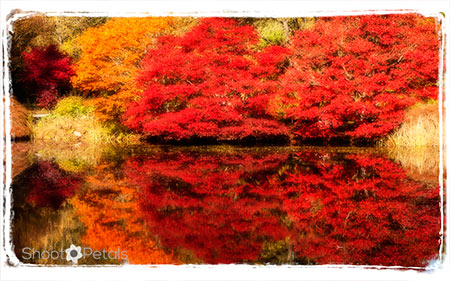 VanDusen Botanical garden autumn reflections