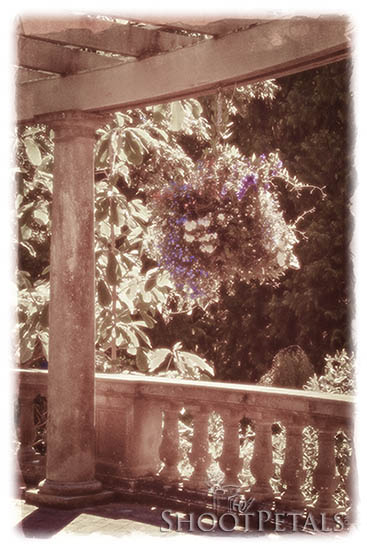 Hanging Plant in the Italian Garden At Hatley Castle