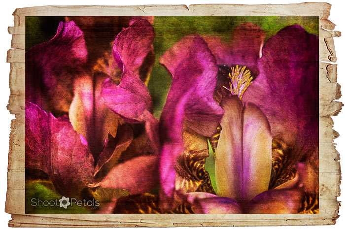 Amazing fuschia & gold, textures and an old paper frame.