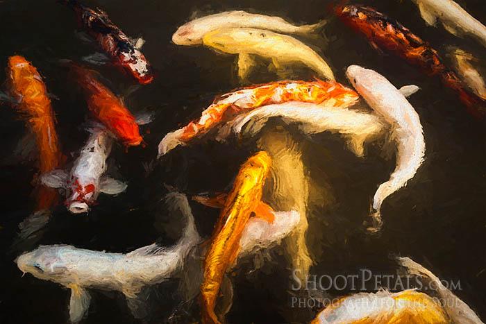 Yeomiji Japanese Garden Koi Fish