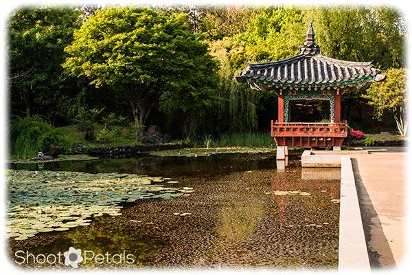 Traditional Korean Garden Jeju Island