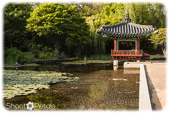 Leading Lines Korean Traditional Garden