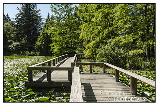 Boardwalk across Livingston Lake, VanDusen Botanical Garden