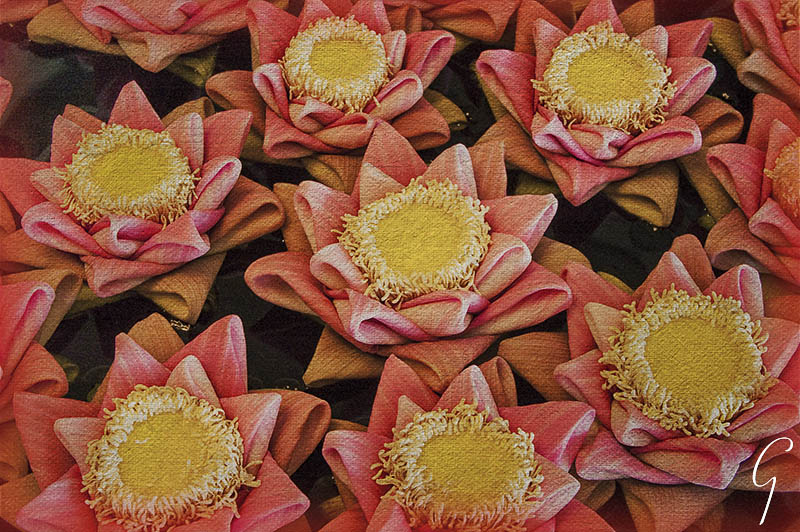 Folded Lotus Blossoms in Hotel in Siem Reap, Cambodia