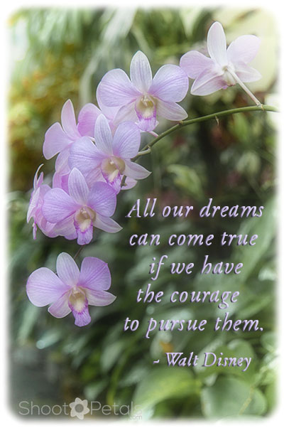 Violet coloured epidendrum orchids with Disney quote.
