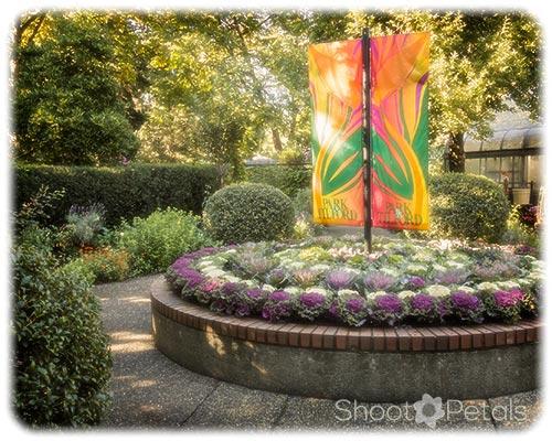 Park Tilford Gardens Ornamental Cabbages