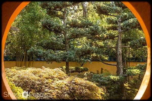 The Japanese Garden fron the Tea House.
