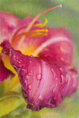 Painterly Fuchsia Daylily With Raindrops
