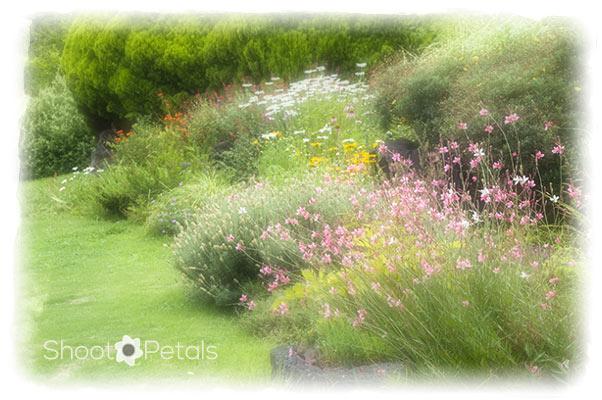 Perennial Garden Jeju Island, South Korea