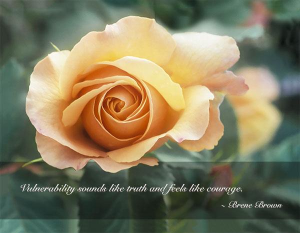 Luscious peach rose and bud, VanDusen Rose Garden