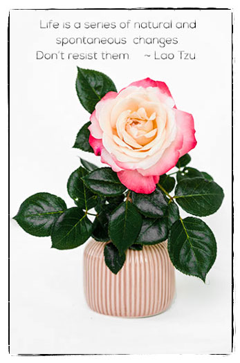 Tricolor rose in a vase with quote.
