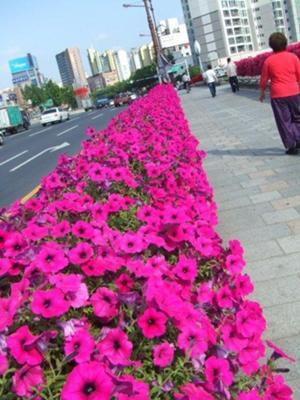Daegu Bridge Garden 1